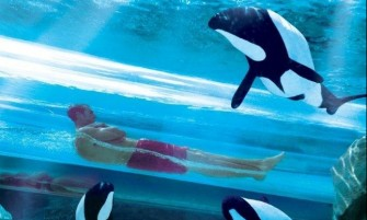 SeaWorld 2 Parques