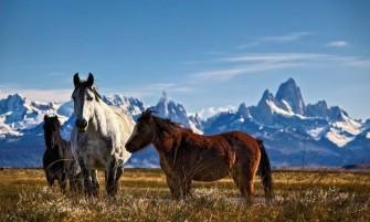 Calafate & Ushuaia 4*